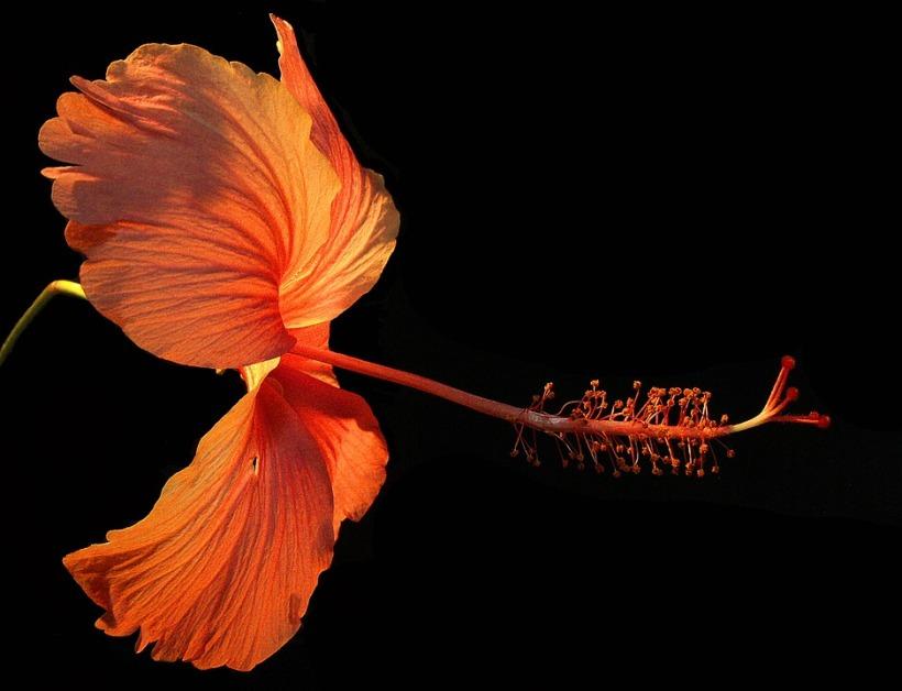 flower-182407_960_720